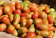 Almost ripe Tomatoes - Kidame Gebya - Open Air Market - Gondar Amhara Ethiopia