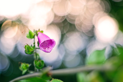 Home Garden Bokeh | July 18, 2020 | In the district of Segeberg - Schleswig-Holstein - Germany | by torstenbehrens