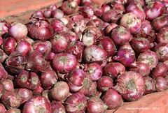 Red Onions - Kidame Gebya - Open Air Market - Gondar Amhara Ethiopia