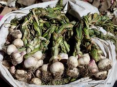 Garlic Bulbs - Kidame Gebya - Open Air Market - Gondar Amhara Ethiopia