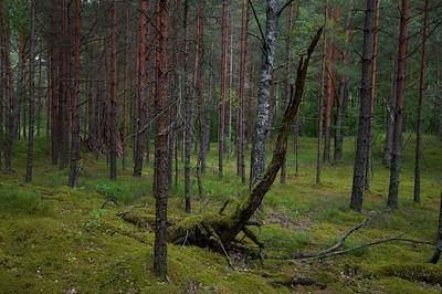 Forest Lean Diplodocus