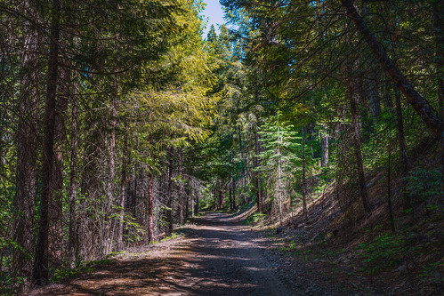 solemn california d850 colorful landscape tree forest trail serious creepy quiet trees dirtroad mountain somerset unitedstatesofamerica