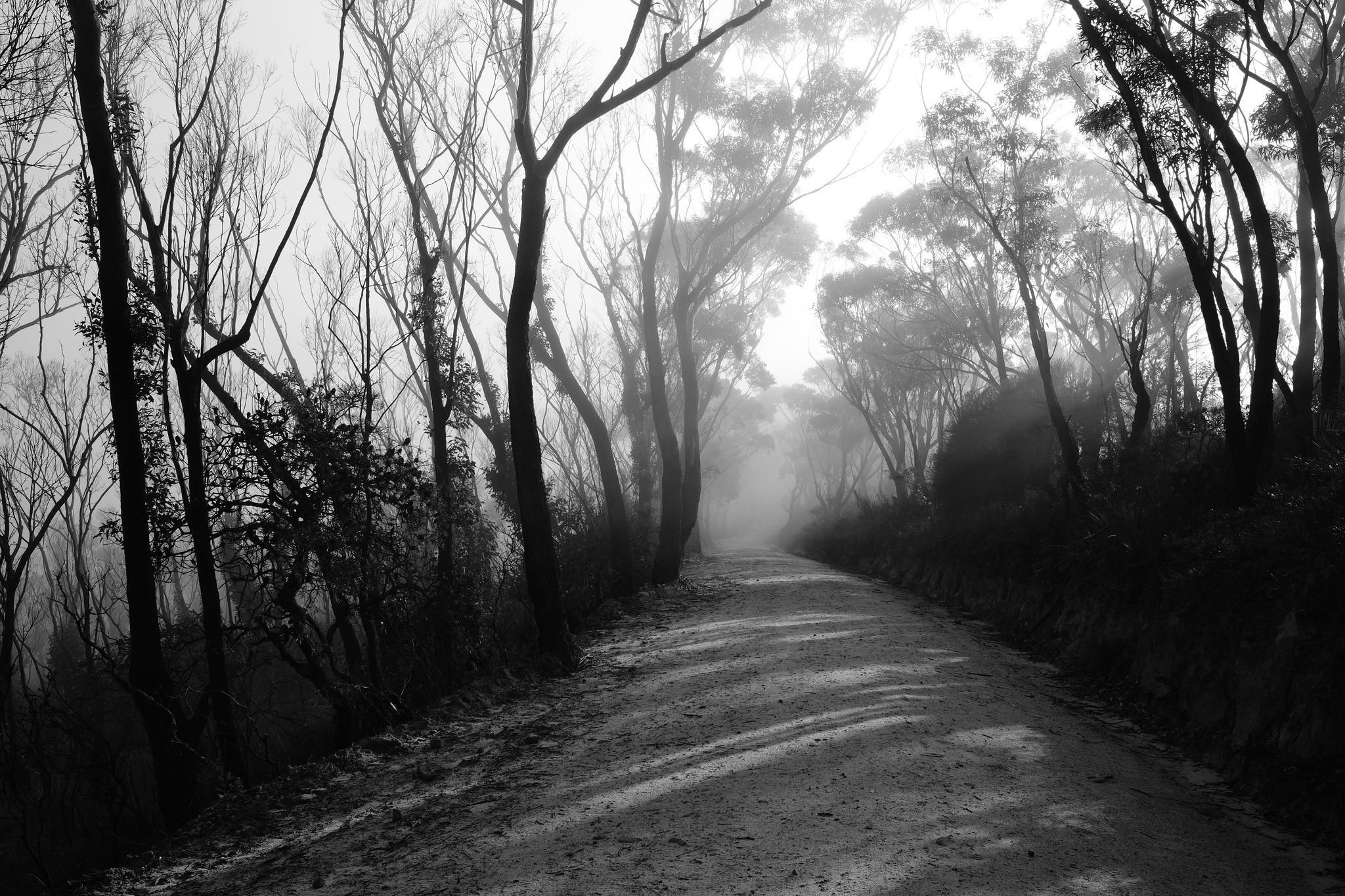 Narrow Neck Trail