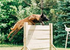2020-07-05, Jagger Training-14