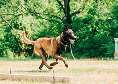 2020-07-05, Jagger Training-10