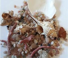 raccolta sulla spiaggia