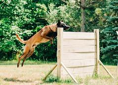 2020-07-05, Jagger Training-13