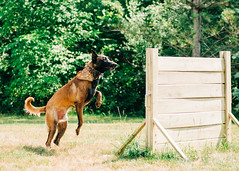 2020-07-05, Jagger Training-12