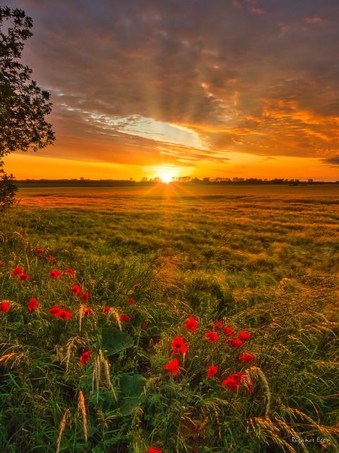 Sonnenuntergang - Insel Rügen