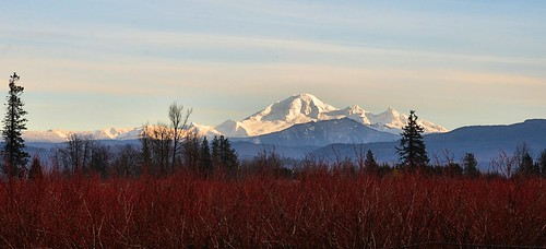 nikond7000 nikkor18to200mmvrlens canada britishcolumbia bc abbotsford mtbaker volcano snowcapped blueberrybushes red white redandwhite