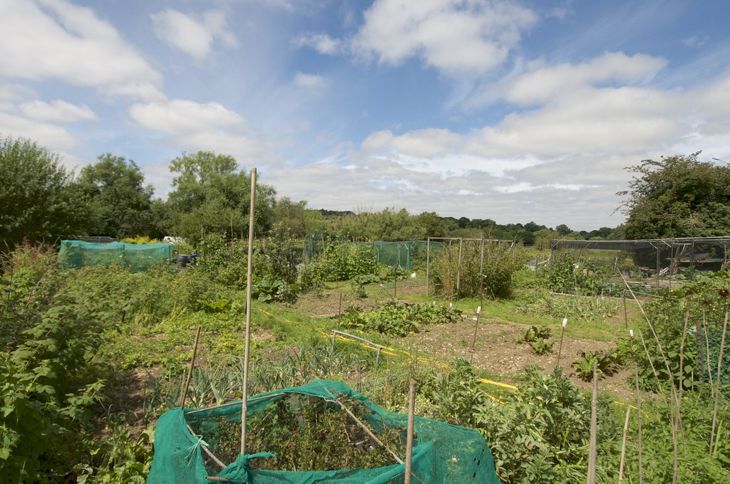 Chalfont St Peters Hill House Allotment Gardens | Ian Wood | Flickr