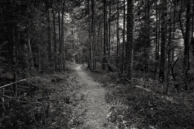 Ossau, forest.