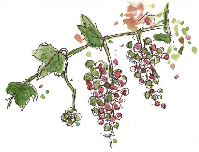 LDD 071820 Grapes