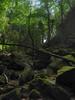 Under the moss