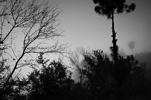 shimla landscape blackandwhite bw trees sky train toytrain himachal journey travel monsoon clouds cloudy fog