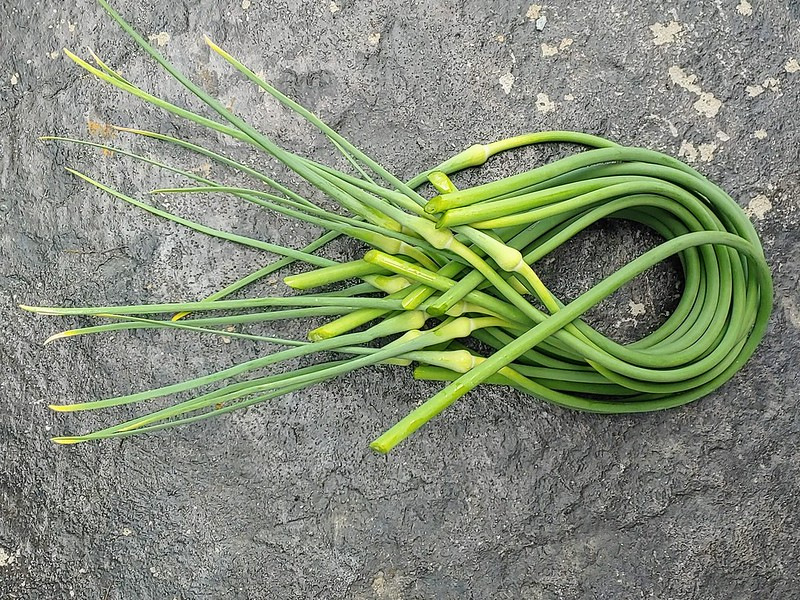 Harvested Garlic Scapes!