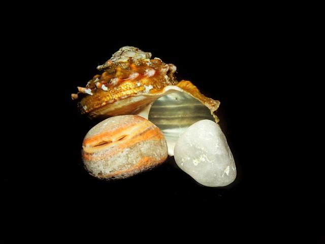 shells and pebbles...