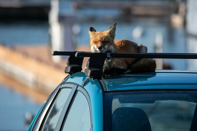 Car Napping