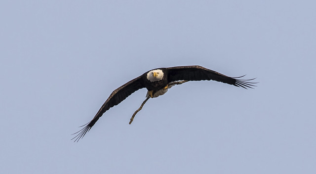 Stick for the nest....