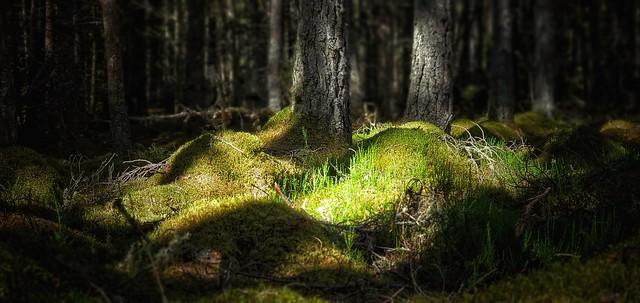 Beneath the Pines