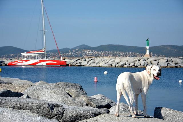 Promenade au port...