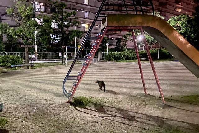 Today's Cat@2020ー07ー19