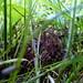 Tiny Baby Toad