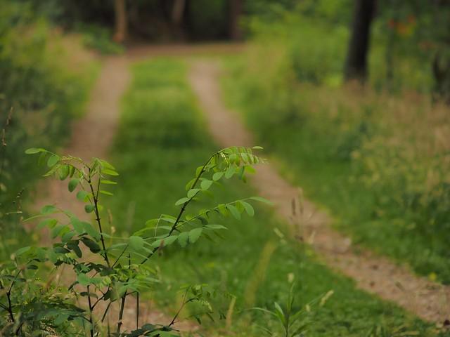 Weg in der Teverener Heide
