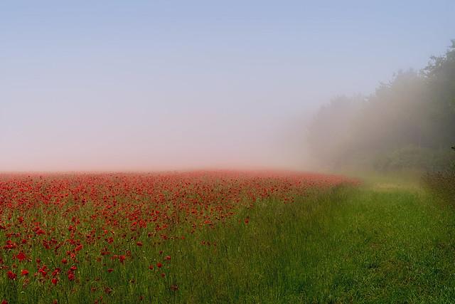 Poppy Mist