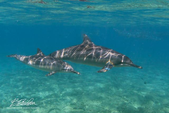 Sun-dappled Dolphins