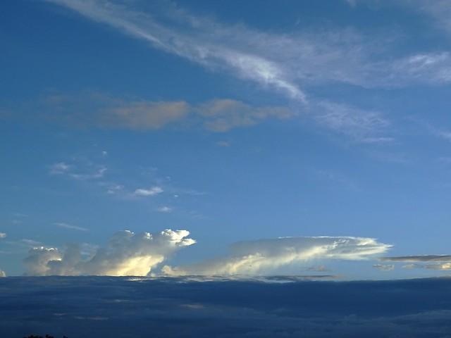 Dauphins célestes jouant dans l'azur