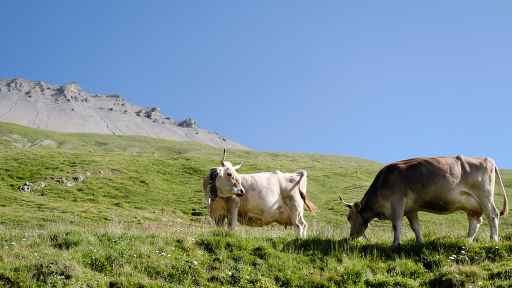 Alpine Cheese Production, First Part