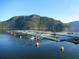 Grieg Seafood Fish Farm | by D-Stanley
