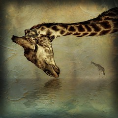 The Vulnerable Giraffe