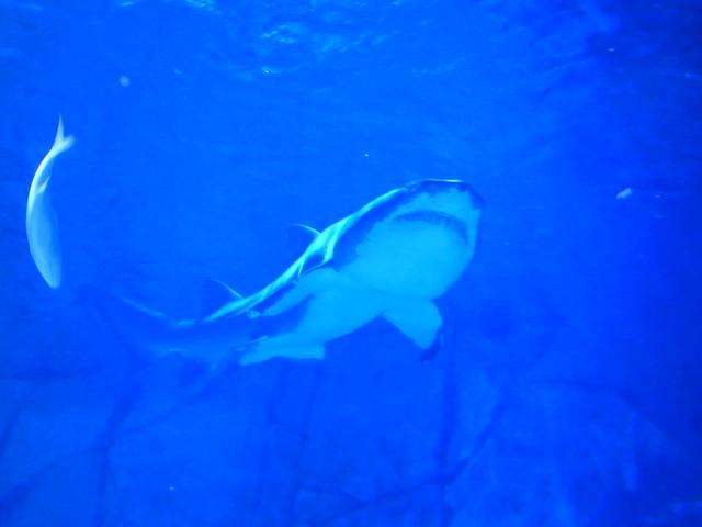 Newport Aquarium Kentucky 07192020