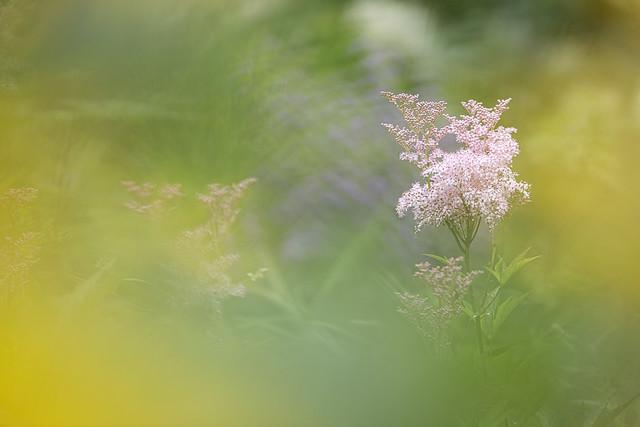 Douceur jardin