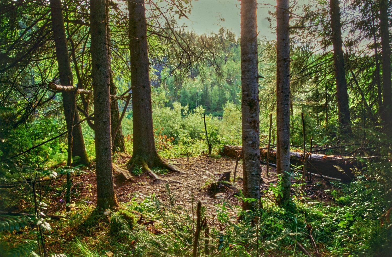 Vishera Nature Reserve