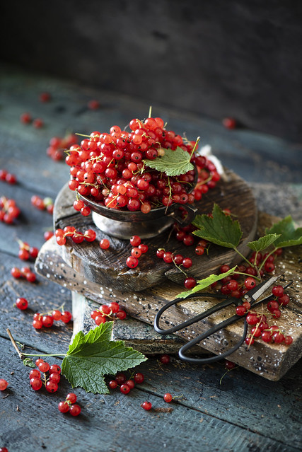 Red currant s
