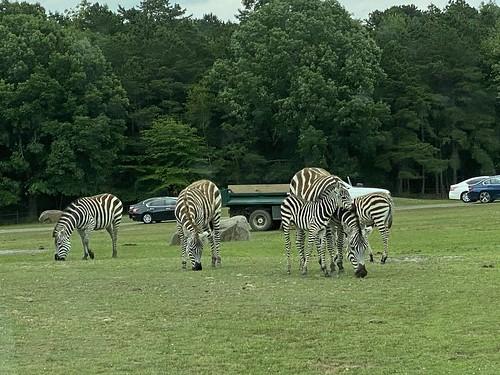 Six Flags Safari