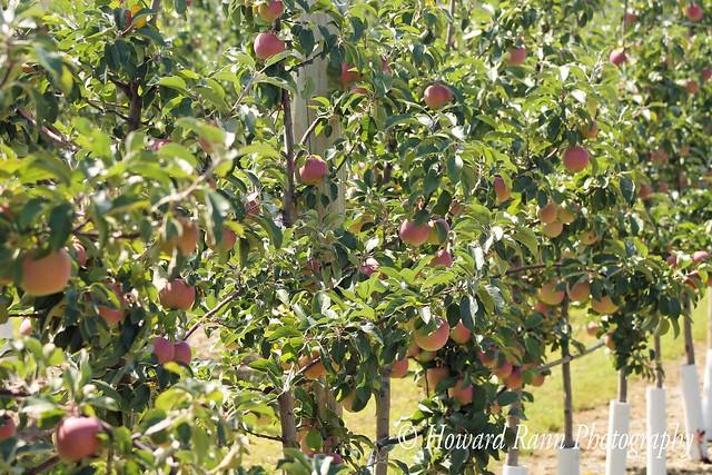 Lakeland Orchard (256)