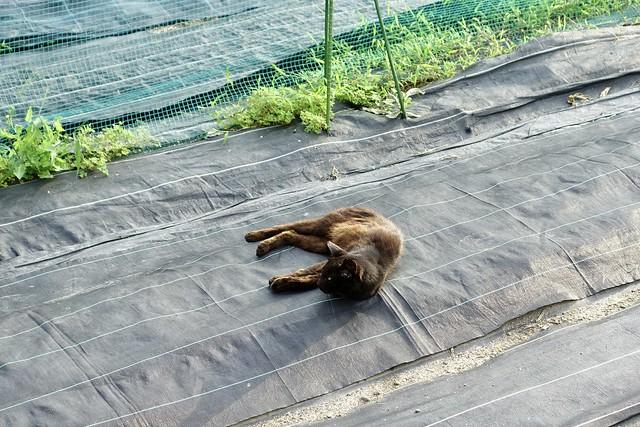 Today's Cat@2020ー07ー20
