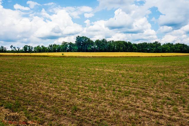 Farmland on a Beautiful Day