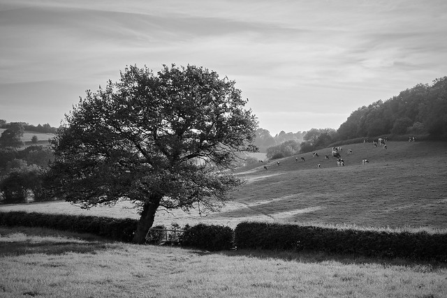 Pentrich Common