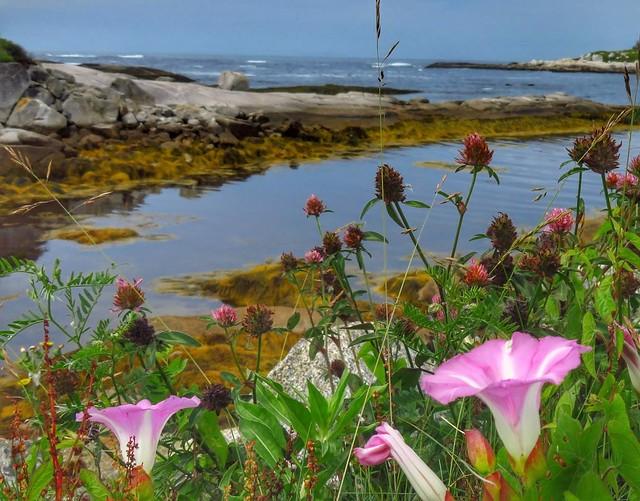 More Roadside Wildflowers