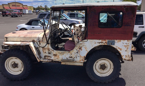 dog_in_old_jeep-20200719-102
