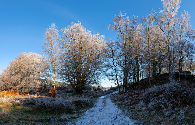 Winter at Burnt Wood