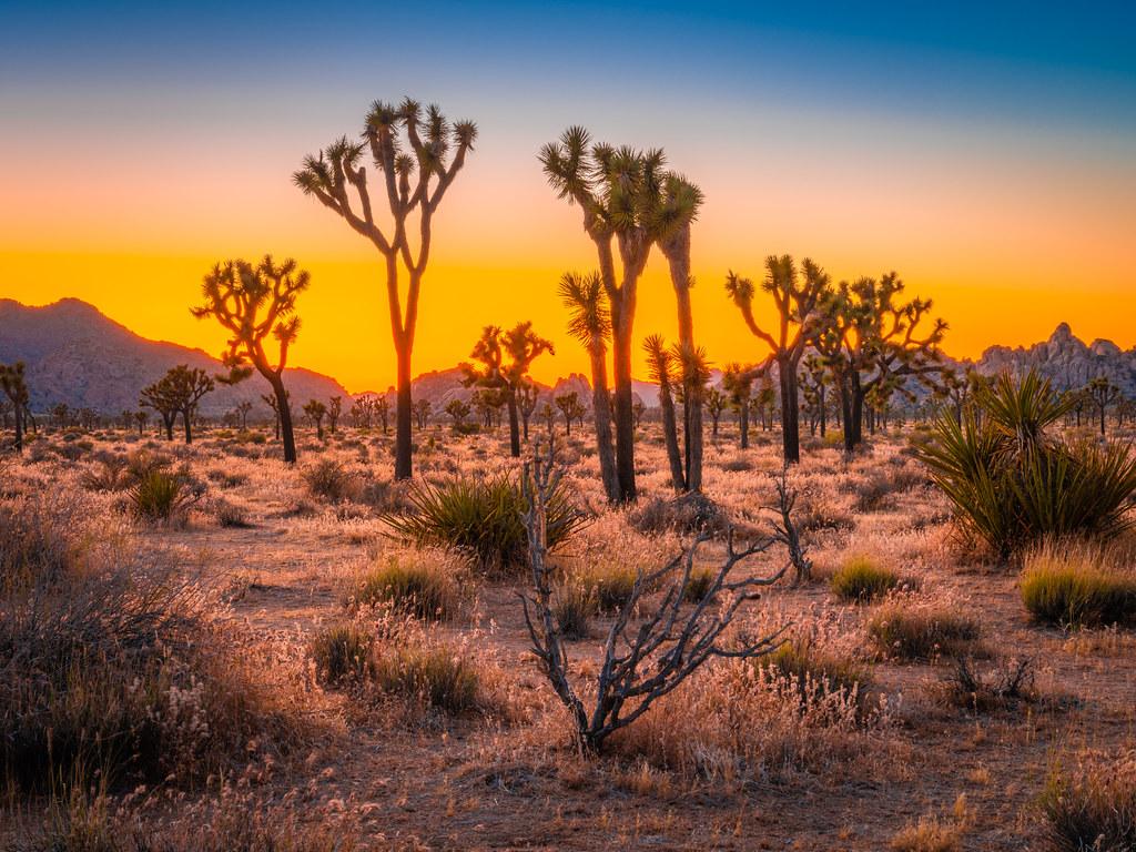 Joshua Tree National Park California Fuji GFX100 Fine Art Landscape Nature Photography! Elliot McGucken 45EPIC Stoic Astro Photography! Fuji GFX100 & Fujifilm Fujinon Lm Ois Wr Zoom Lens Medium Format
