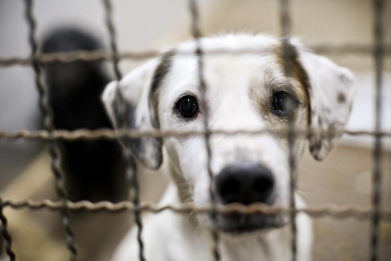 Zoonoses tem 83 animais aptos para adoção