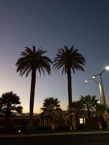 lasvegas vegas palmtree sunset tree