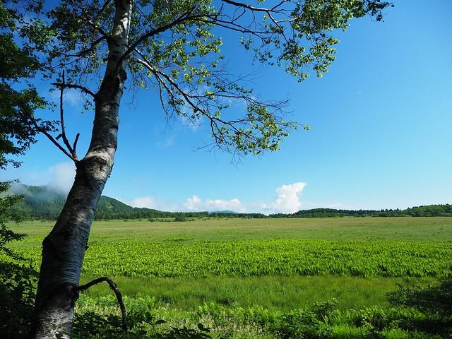 霧ヶ峰 200719 (7)